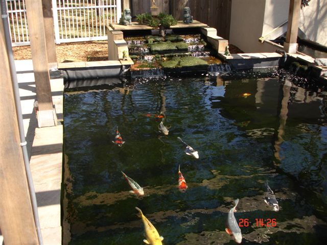 Show Us Your Raised Ponds With Waterfall