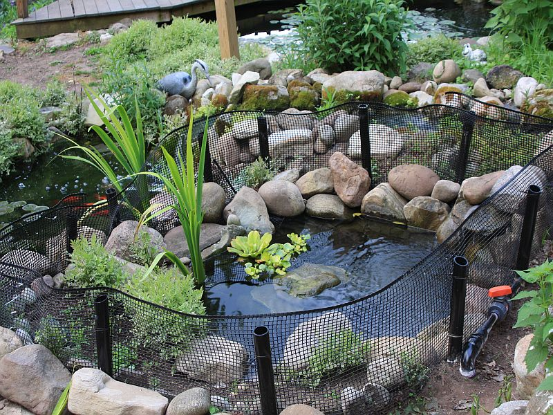 Turtle ponds quotes for Building a yard pond