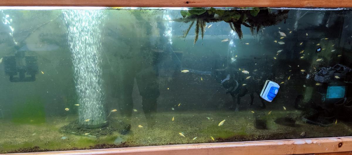 Name:  Remaining Fish.jpg Views: 203 Size:  85.2 KB