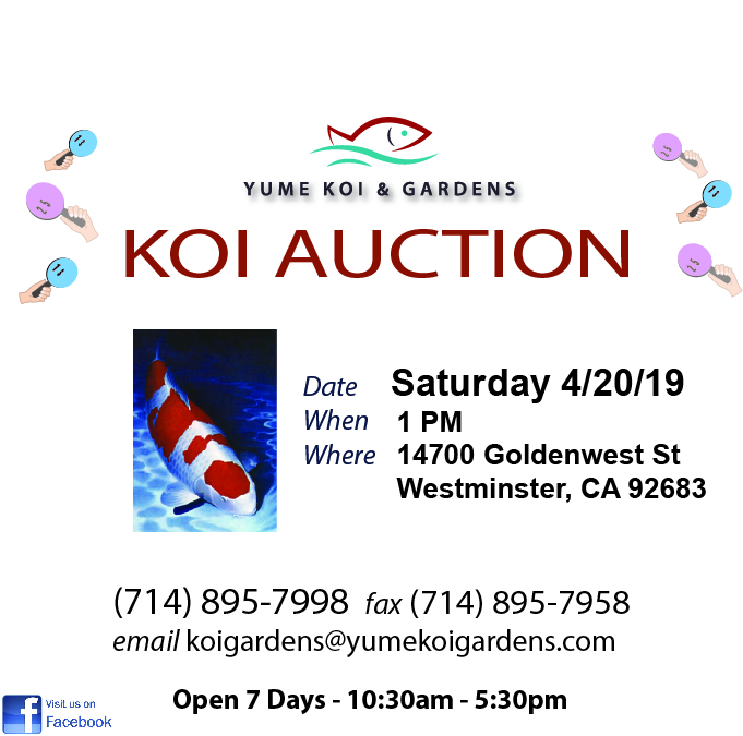 Name:  Yume Koi with Auction flyer 19.jpg