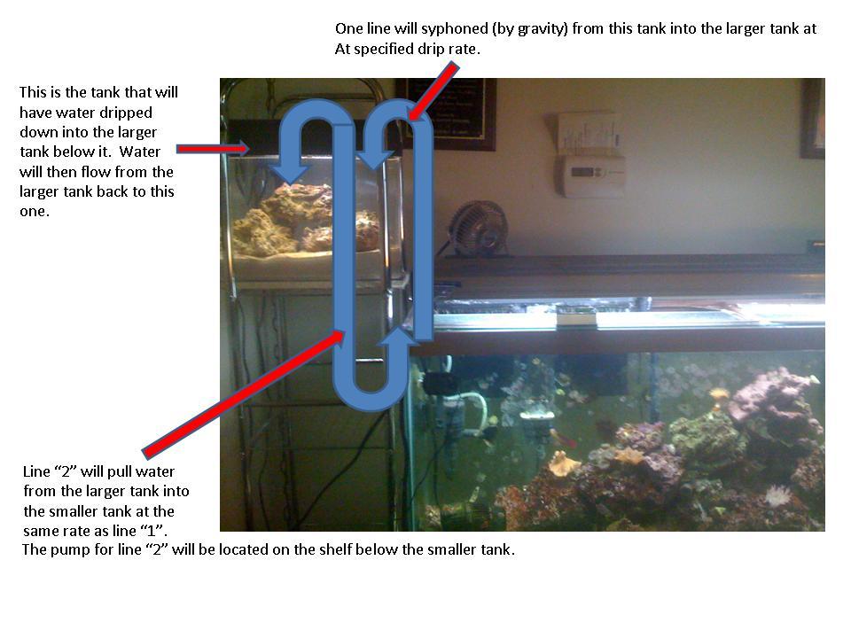 Fish tank setup for Koi fish tank setup