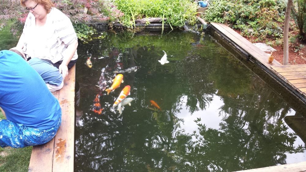 Name:  pond.jpg Views: 233 Size:  296.2 KB