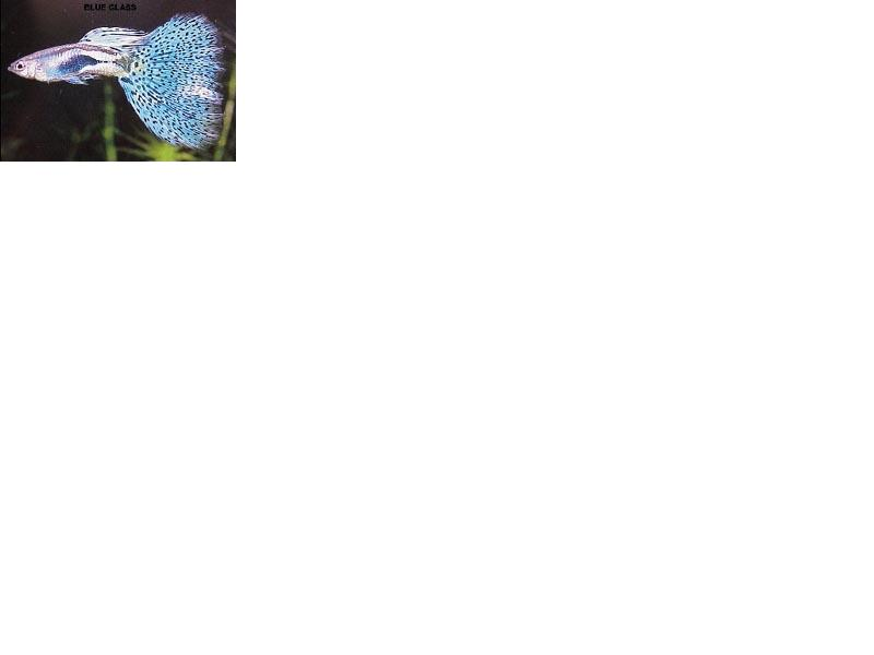 Name:  blue glass.JPG Views: 4137 Size:  16.4 KB