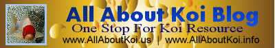 Name:  allaboutkoi_banner.jpg