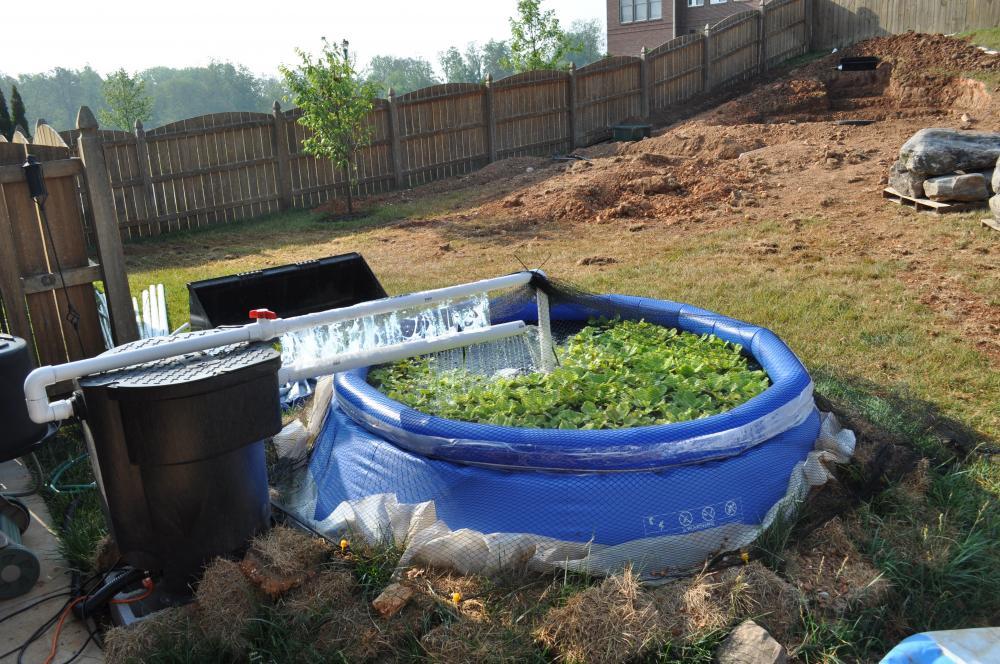 Using portable pool as temporary pond for Koi show pool