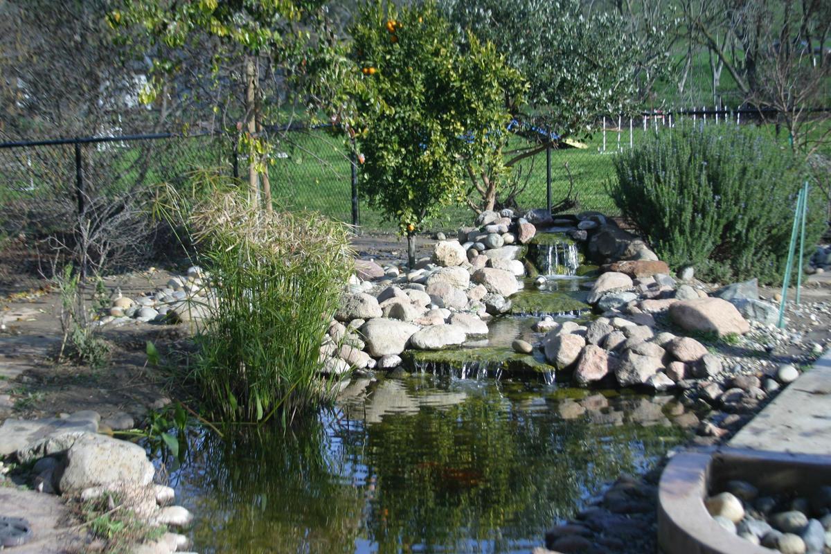 Name:  Pond.jpg Views: 285 Size:  265.6 KB