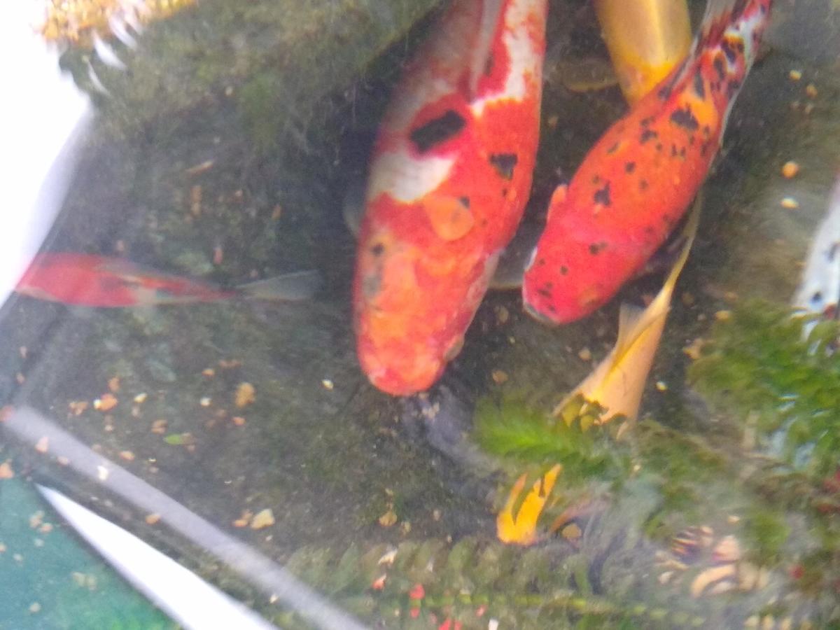 Name:  fish 2.jpg Views: 189 Size:  98.9 KB