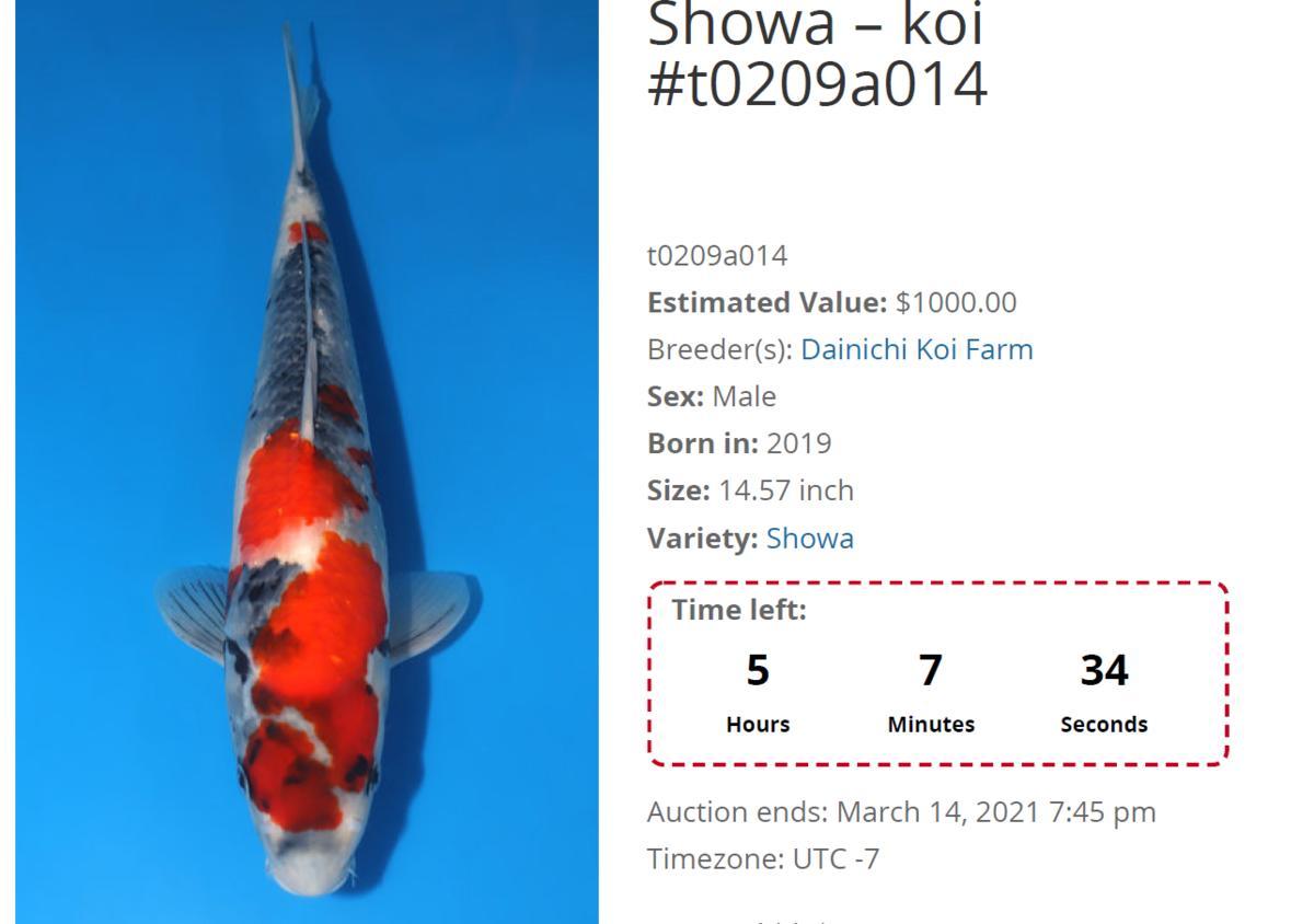 Name:  male koi.jpg Views: 37 Size:  63.0 KB